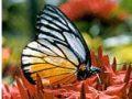 Foto: Butterfly Garden Koh Samui (Schmetterlingsfarm)